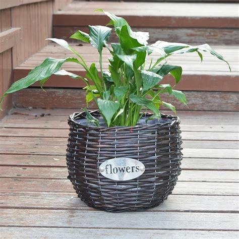 vasi in vimini acquista all ingrosso vimini vasi di piante da