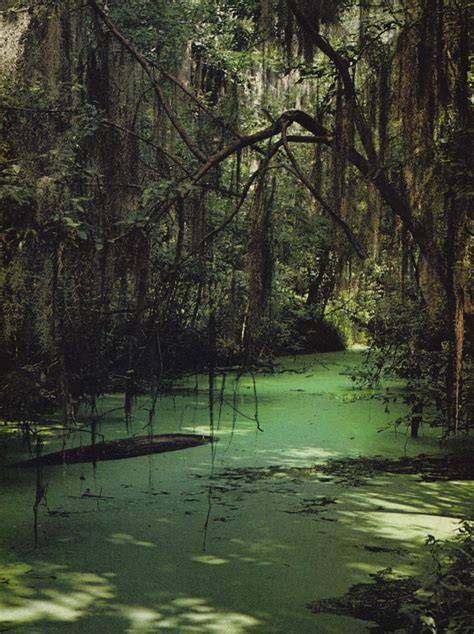 boat ride spanish okefenokee sw i m convinced that no one knows about