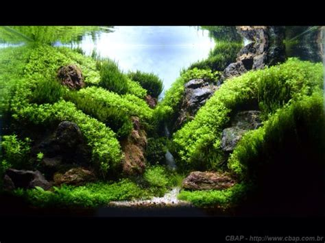 Freshwater Aquascaping Ideas by Great Mountain Valley Type Aquascape Freshwater Aquaria