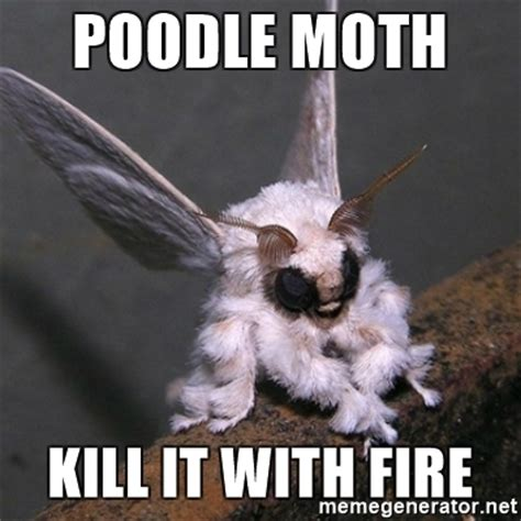 Moth Meme - moth meme 28 images related keywords suggestions for