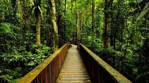 amazon de rainforest wallpaper 24485 1920x1080 px hdwallsource com