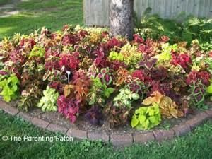 Garden Plants Flowers Arbor Day Pins Popular Parenting Pin Picks