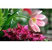 Paisajes Naturales Animales Y Flores En La Naturaleza Flowers Car