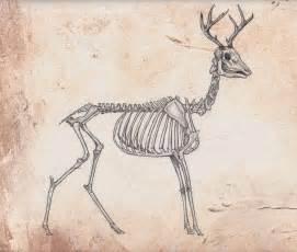 Deer Skull Anatomy » Home Design 2017