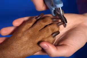 how to clip your dog s nails safely