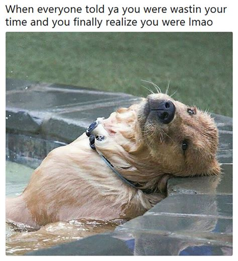 Make You Meme - 40 funny animal memes that will make you laugh till you die