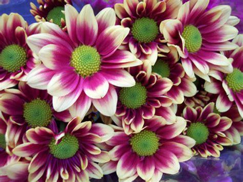 imagenes rosas mas bellas mundo fotos de flores hermosas del mundo imagenes de paisajes