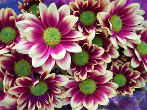 imagenes de las flores mas lindas del mundo imagenes de fotos de flores hermosas del mundo imagenes de paisajes