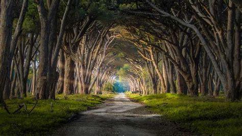 imagenes de bosques otoñales d 237 a internacional de los bosques tropicales magia y