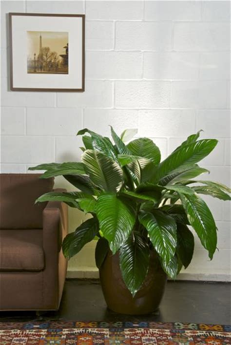 houston s online indoor plant pot store extra large 1000 images about plants on pinterest gardens masons