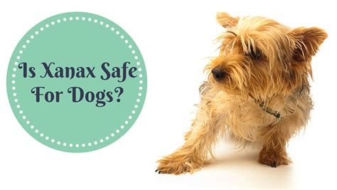 can you give a xanax is xanax safe for dogs smart owners