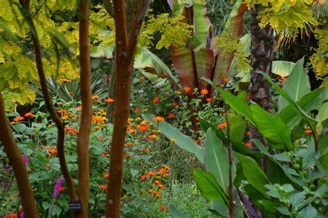 Dschungel Pflanzen by Tiere Pflanzen Landschaften Dschungel
