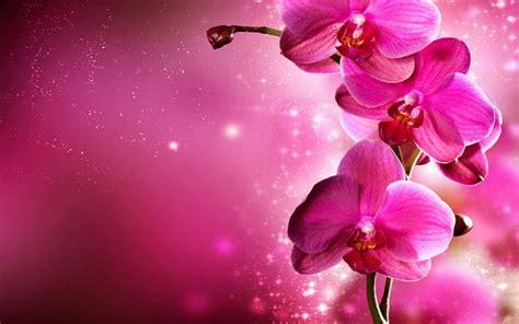 wallpaper pink design 40 cool pink wallpapers for your desktop
