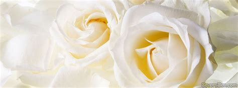 imagenes de rosas blancas para facebook cover photos for facebook flowers black and white www