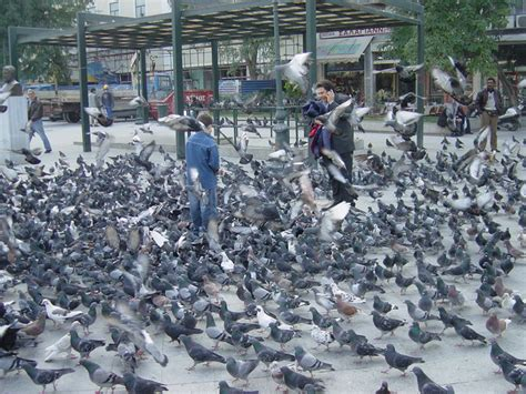 photo best place to feed pigeons