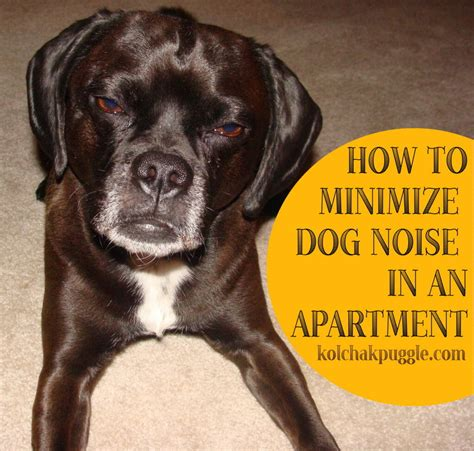 noises dogs how to minimize noise in an apartment kol s notes