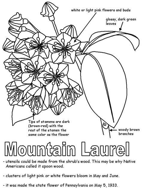 mountain laurel with labels