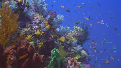 diving raja ampat hd youtube