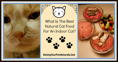 best cat food brands archives raising your pets naturally with tonya wilhelm