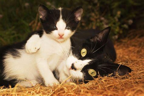 imagenes en blanco y negro gatitos fotos de gatos galeria de fotografias artisticas sobre