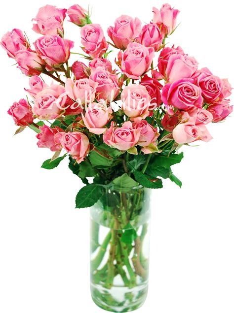 Pink Roses In A Vase by Spotlight Enchanted Florist