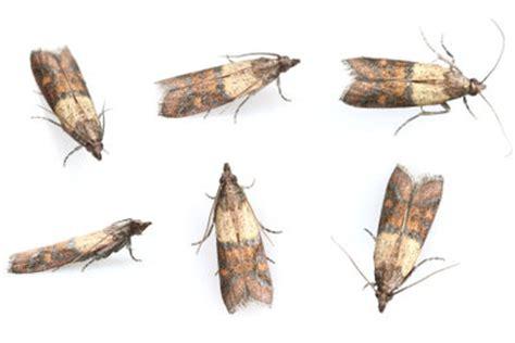 fliegenlarven in der wohnung maden im teppich so entfernen sie die kleinen mitbewohner