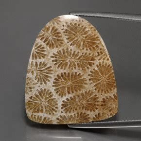 Fossil Egb fossil coral 25 7ct fancy from indonesia and