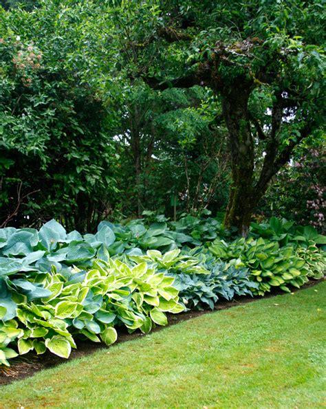 Hosta Garden Layout Hosta Design 101 Garden Bulb Flower Bulbs Gardening Tips