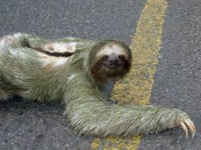 Doormat For Dogs Sloth Pictures