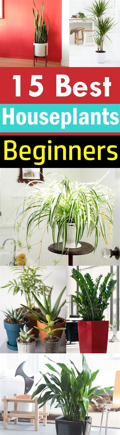 easy plants to grow indoors 25 best ideas about indoor flowering plants on pinterest