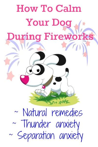 at what age do puppies calm how to calm your anxious during fireworks the savvy age