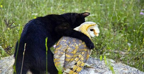 cat  owl  unusual  friends    start playing  results  priceless