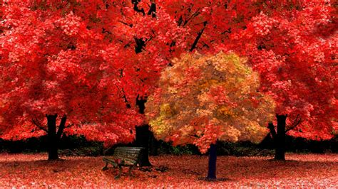 red autumn leaves wallpaper high definition high