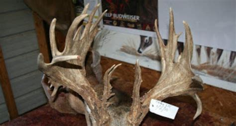 World Record Deer Rack by Whitetail Buck Sets A Record That S Anything But Typical