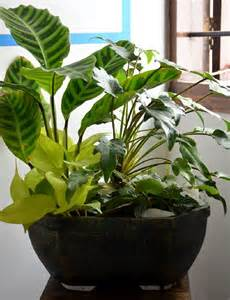 live indoor plants indoor live bouquet only for bangalore delivery greenmylife anyone can garden