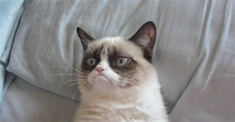 grumpy cat top 5 grumpy cat stuffed animals stuffedparty the