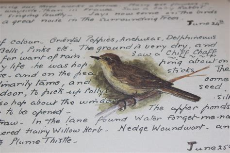 shabby chic bird pictures our shabby chic cottage shabby chic ideas for the home