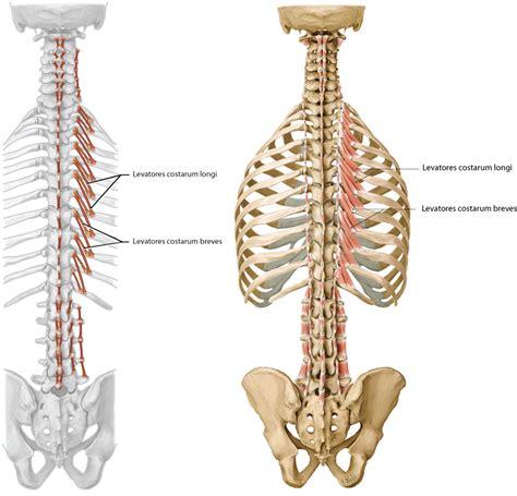 Amazing Michigan Gross Anatomy Adornment - Image of internal organs ...