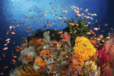 The Great the great barrier reef stemjobs
