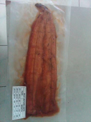Jual Bibit Ikan Sidat Sukabumi jual ikan sidat dan bibit budidaya sidat anguilla