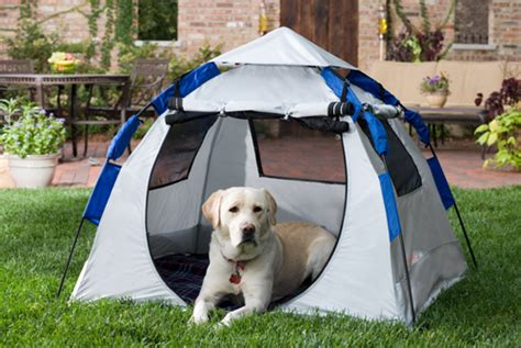 puppy tent tent flickr photo