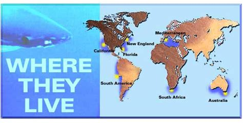 Find Out Where Live The Shark Gallery Great White Shark Teritory
