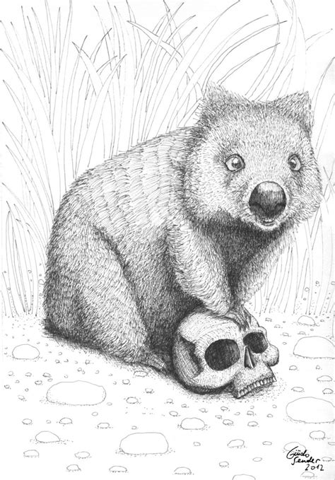 wombat tattoo designs 13 best wombats images on australian