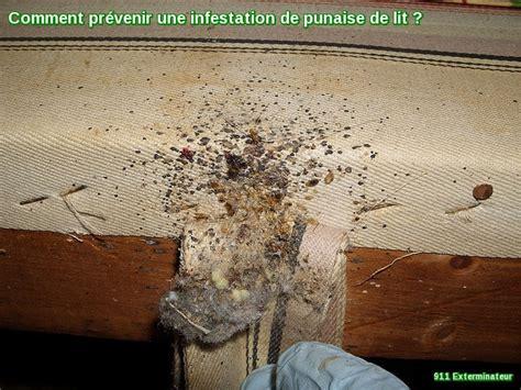 infestation de punaise de lit comment la pr 233 venir il