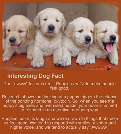 facts about puppies interesting facts veterinary medicine
