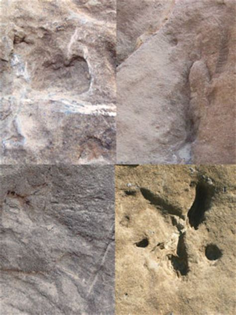 huellas y rastros de huellas y rastros f 243 siles revista 191 c 243 mo ves direcci 243 n general de divulgaci 243 n de la ciencia