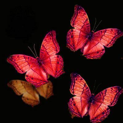 imagenes mariposas rojas el beso que trajo tanta paz