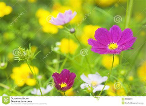 prato con fiori prato con i fiori immagini stock libere da diritti