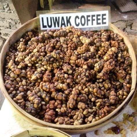 Kopi Luwak Coffee kopi luwak the civet coffee visit in bali coffeesphere