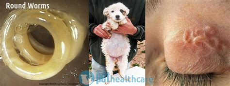 deworming puppies how does it take are you deworming your pet regularly pethealthcare co zaare you deworming your pet